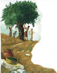 "Diane Simon's depiction of olive harvesting for the modern Hebrew ""Children's Bible Illustrated"""