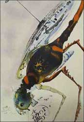 Surrealist Salvador Dali's depiction of a locust